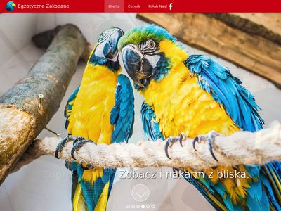 Atrakcje w Zakopanem - Papugarnia
