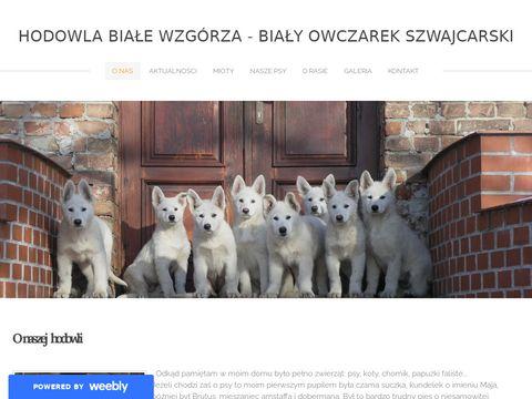Hodowla Białe Wzgórza - Biały owczarek szwajcarski