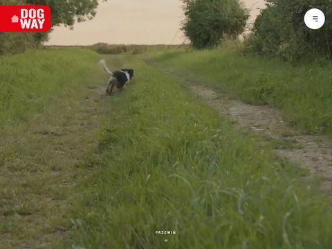 DOGWAY - smako艂yki dla szczeniak贸w