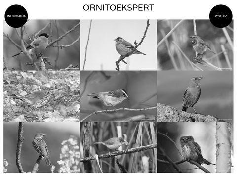 Ekspertyzy Ornitologiczne