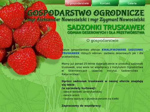 Sadzonki truskawek - Gospodarstwo Ogrodnicze