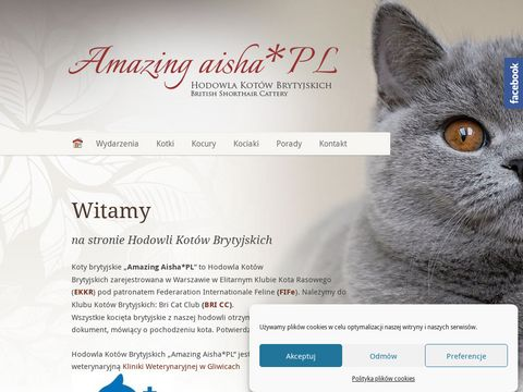 Koty Brytyjskie AISHA - Hodowla Kot贸w Rasowych