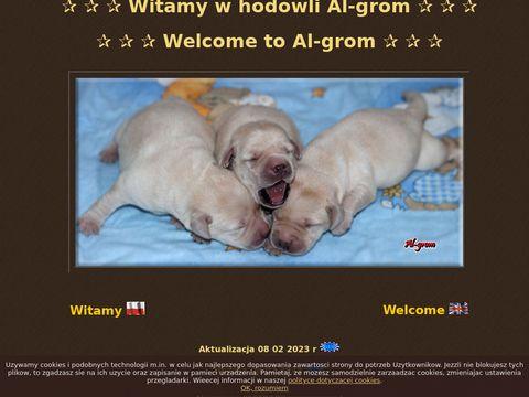 Al-grom hodowla ps贸w Labrador Retriever