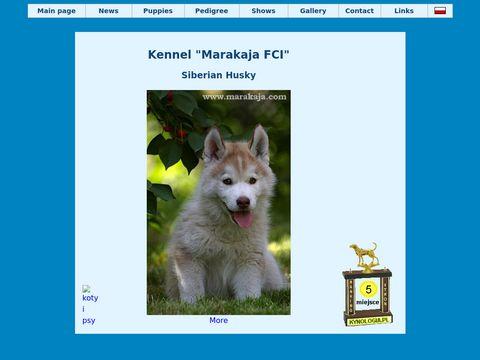 Hodowla psów rasowych Marakaja - siberian husky