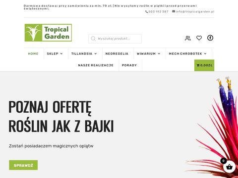 Tillandsia sklep - tropicalgarden.pl