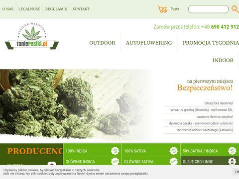 Feminizowane nasiona marihuany i konopi