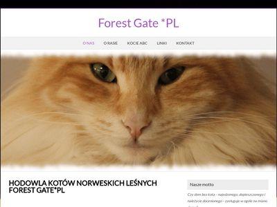 Hodowla kotów norweskich leśnych Forest Gate*PL