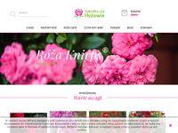 Szkółka Róż Hyzowie.com - Szeroki wybór sadzonek róż