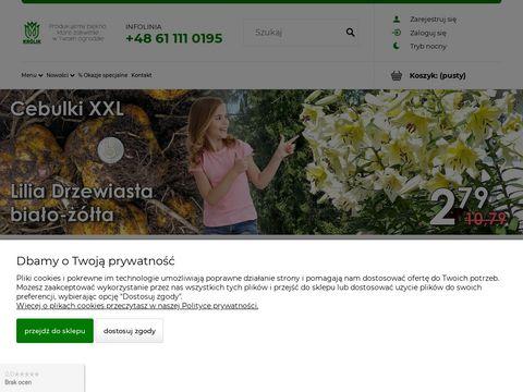 Hurtownia ogrodnicza   cebulki-kwiatowe.pl